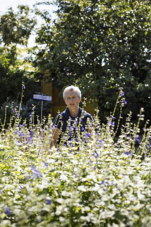 Tour with Annemarie, the gardener in the framework of Tamás Kaszás, Bauhaus Beehive, 2015. Photo: BAU