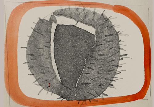 The chestnut. Artwork: Amy Franceschini